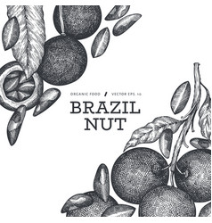 Hand drawn brazilian branch and kernels vector