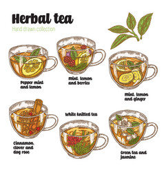 hand drawn various herbal tea recipe for health vector image