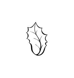 ilex aquifolium leaf coloring book vector image
