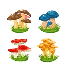 mushrooms in grass vector image