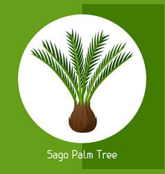 sago palm tree exotic tropical vector image