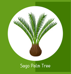 Sago palm tree of exotic tropical vector