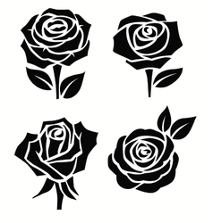 Beautiful roses flower vector