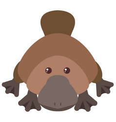 Cute platypus on white background vector