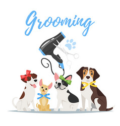 grooming concept with dogs vector image