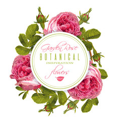 rose round banner vector image