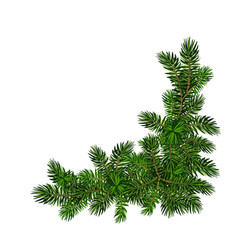 Two green spruce branches realistic christmas vector