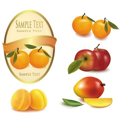 A label and some fruit vector vector