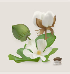 Cotton stages vector