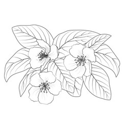 drawing of a flowering branch vector image