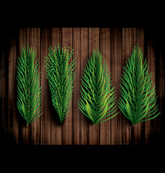 fir branches set christmas tree pine sprigs vector image