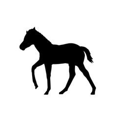 Foal horse farm mammal black silhouette animal vector