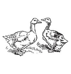 Goose and gander vintage vector