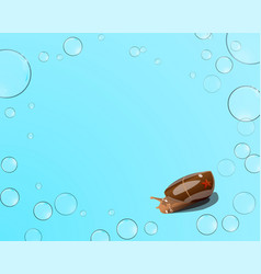 Starfish and snail bubbles on a blue background vector