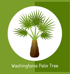 Washingtonia palm tree of exotic vector