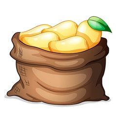 A sack of ripe mangoes vector image vector image