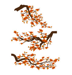 decoration branches with flowers spring blossom vector image