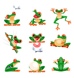 Funny frogs in various poses amphibian croaking vector