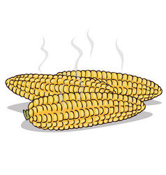 Isolate boiled corn ears with steam vector