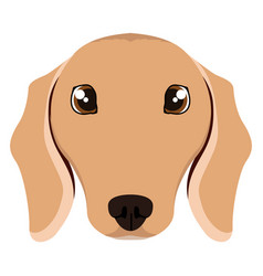 isolated dachshund avatar vector image