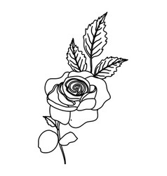 outline nature rose plant with branch leaves vector image