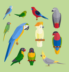 parrots birds breed species animal nature tropical vector image