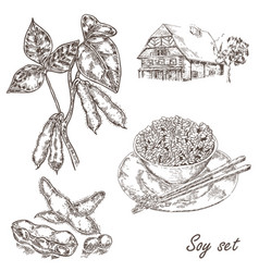Soy twig and soybean set in sketch vector
