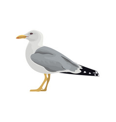 The common seagull mew gull european herring gull vector