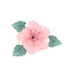 Watercolor hibiscus flower in pink vector