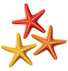 starfishes vector image vector image