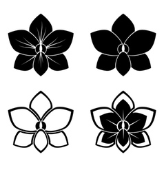 orchid silhouettes vector image vector image