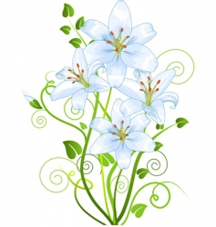 lilly vector image vector image