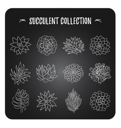 a collection of different types of succulents vector image