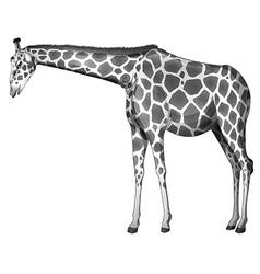 A grey giraffe vector