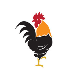 Cock design on white background farm animals vector