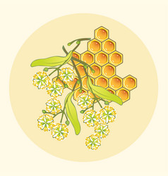 linden honey vector image