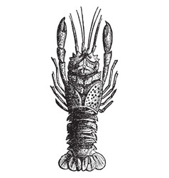 Lobster fossil vintage vector