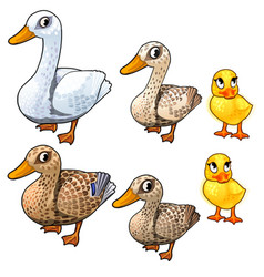 maturation stages duck three stages growth vector image