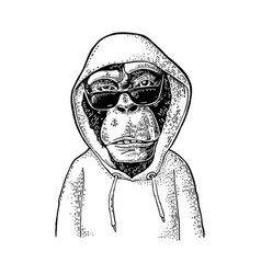 Monkey hipster with sunglasses dressed vector