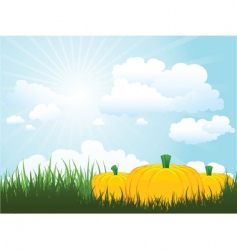 Pumpkins in grass vector