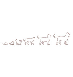 Stages cat growth set from kitten to adult cat vector