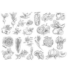 sketch of vegetarian food vegetables vector image