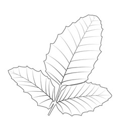 naturalistic autumn leaves on white vector image