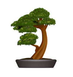 realistic 3d detailed bonsai pine in container vector image