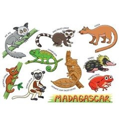 set cute animals cartoon in madagascar vector image