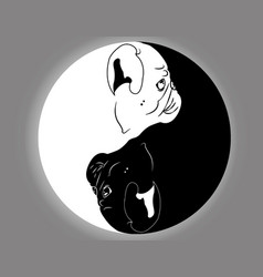 yin yang pug vector image