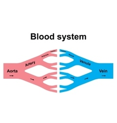 Blood circulation system vector