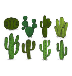 hand drawn engraving cactus set isolated on vector image