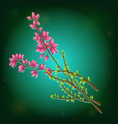 icon of calluna vulgaris or heather vector image