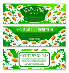 spring daisy flowers banner set design vector image